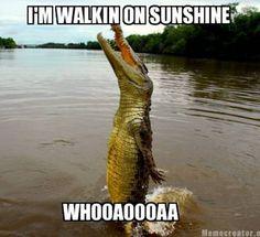 Крокодайл