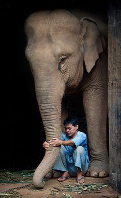 Mahout Em and his elephant at Anantara Golden Triangle Elephant Camp & Resort, near Chiang Rai, Thailand.