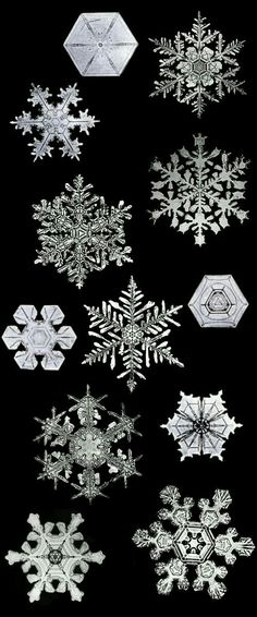 Bentley's snowflakes