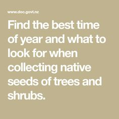 Find the best time of year and what to look for when collecting native seeds of trees and shrubs. Trees And Shrubs, Propagation, Native Plants, Nativity, Seeds, Calendar, Good Things, Collection, Big