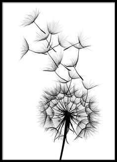 Dandelion no2 Poster in the group Posters & Prints / Sizes / 21x30cm | 8,3x11,8 at Desenio AB (2393)
