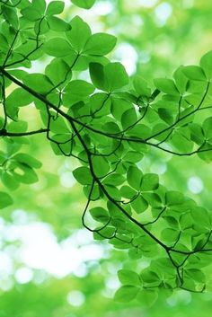 Notice all of the beautiful shades of green in nature. World Of Color, Color Of Life, Go Green, Green Colors, Pretty Green, Kelly Green, Green Fruit, Green Life, Fresh Green