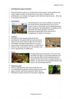 Begrijpend lezen - Jachtluipaard, jaguar of panter