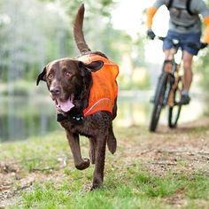 Kurgo Dog Products - Reflect and Protect Active Dog Vest, $20.00 (http://www.kurgo.com/dog-jackets/reflect-and-protect-active-dog-vest/)