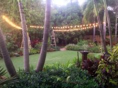 Strung these lights from Party Swizzzle in our backyard. They give off a lot of light and are unique (Look like Glass Buoys in green, blue and white). Florida cottage garden.