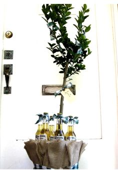 lime tree with limes & corona in the base....probably go with a smaller, indoor version of this massive tree