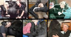 Primates are human