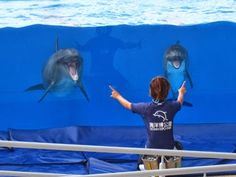 無料で観れる「海洋博公園」のイルカショー