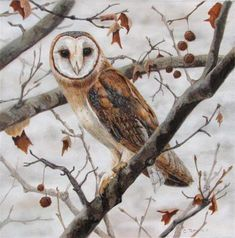 """Subtle Elegance - Barn Owl"" - Original Fine Art for Sale - © Catherine Temple"