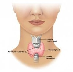 What Symptoms Underactive Thyroid (Hypothyroidism)? - Fatigue - Easy weight gain - Puffy face, droopy eyelids - Infertility - Excessive menstrual bleeding - Intolerance to cold and cold skin - Thinning or loss of outer third of eyebrows - Tightness and swelling of neck - Premenstrual tension - Reduced libido - Depression - Thinning hair on scalp - Loss of appetite, constipation - Dry skin, hair, and brittle nails - Absence of periods - Memory problems, difficulty concentrating