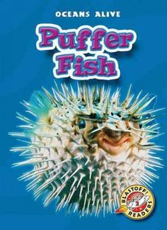 Pictures of baby puffer fish in fact northern puffers for How much is a puffer fish