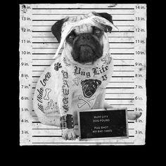 Presidiario canino