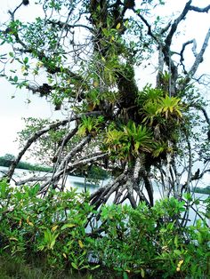 Uramba Bahía Málaga National Natural Park - Colombia. This park offers great opportunities for ecotourism due to the high biodiversity. Located on the Colombian Pacific Coast you can observe Humpback Whales or hike in the jungle. #palenquetourscolombia #travelandmakeadifference #sea #jungle #nationalpark #hiking #nature #ecotourism #biodiversity #sustainability