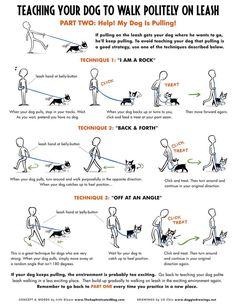 DOG TRAINING TIPS 35