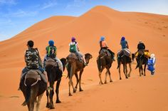 Plan a special #MoroccoDayTrip to experience #Camel #Trekking and Explore #Marrakesh and #BerberVillages.Visit@ http://camelsafaries.net/trekking.html