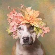 Picture of a pit bull dog with flowers. | Proof, National Geographic