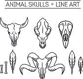 lebky zvířat - - Yahoo Image Search Results