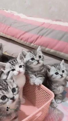 Kittens Cutest, Cute Cats, Magic Cat, Bugatti Cars, Baby Cats, Cat Gif, Spider, Dog Cat, Cute Animals