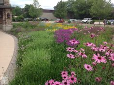 Grand Geneva Resort and Spa   Summer Perennials  #grandgenevagarden #roydiblik #summer
