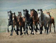 Herd Spain