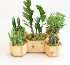 Geometric Wooden Planter Set Modern Planter Set for Succulent Modern Planter Pot Modern Planter Small Planter with Drainage Modern Planters, Wood Planters, Planter Pots, Indoor Planters, Wooden Centerpieces, Modern Plant Stand, Concrete Pots, Cactus Y Suculentas, Flower Pots