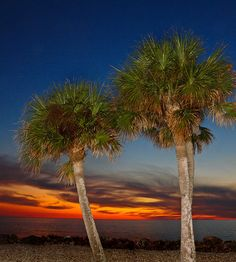 ✮ Sable Palm Sunset
