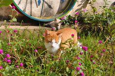 banho de sol Nala e Chanel