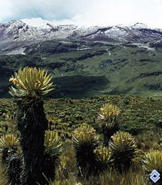 Páramo de Sumapaz Colombia South America, Colombia Travel, Palmiers, Cool Landscapes, Countries Of The World, Central America, Travel Around, Mother Nature, Tourism