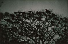 Masahisa Fukase 深瀬 昌久 Untitled, The Solitude of Ravens, 1977 Kanazawa, Herbert List, Photography Gallery, Fine Art Photography, Landscape Photography, Photography Books, Conceptual Photography, Contemporary Photography, Monochrome Photography