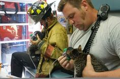 Tampa firefighters rescued three cats and a 7-foot boa constrictor from house fire