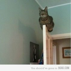Cats are so weird