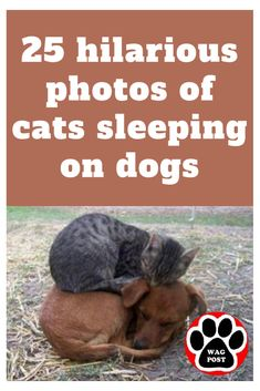 25 hilarious photos of cats sleeping on dogs Horse Dance, Cat Sleeping, Dog Paws, Rescue Dogs, Farm Animals, Funny Photos, Puppy Love, Dog Training, Dogs And Puppies