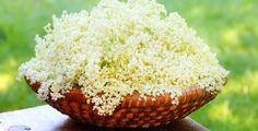 Květy lze použít k fermentaci pro výrobu šťáv a sirupů