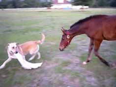 horse and dog play