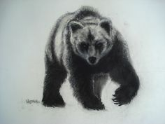 Stalker:  Grizzly on the Move.  Charcoal and pastel on paper.