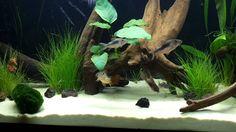 Corydoras new home