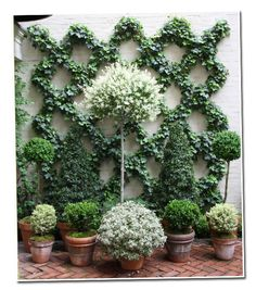 Espalier & gorgeous dwarf topiaries. Would be nice on a balcony or patio growing up lattice