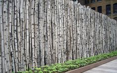 birch fence. thomas balsley associates. so cool…