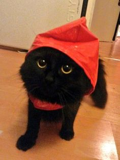 This very fancy raincoat man. | 23 Cat Pictures That Will Make You Almost Too Happy
