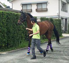 凱旋門賞に挑むダービー馬マカヒキが15日、栗東へ帰厩した。
