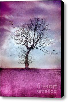 Atmospheric Tree - Morning Glow Stretched Canvas Print / Canvas Art By #Viaina $64