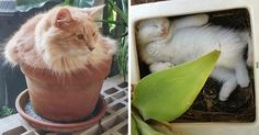10+ Images Of 'Cat-Being-Plants Moments'