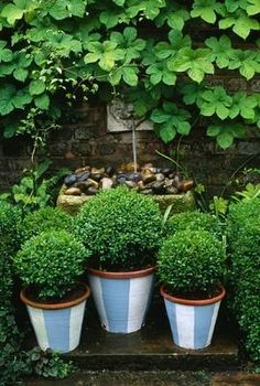 Small boxwood in painted striped terracotta containers Container Plants, Container Gardening, Flower Containers, Formal Gardens, Outdoor Gardens, Formal Garden Design, Topiary Garden, Lawn And Garden, Green Garden