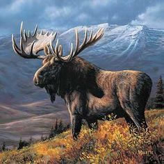 A majestic bull moose stands tall and proud on his hilltop. This breathtaking wildlife wrapped canvas print is sure to liven up any wall. The wrapped canvas design gives a unique and refreshing look t Get all the goodies Moose Hunting, Bull Moose, Hunting Art, Moose Art, Hunting Painting, Wildlife Paintings, Wildlife Art, Animal Paintings, Animals Beautiful