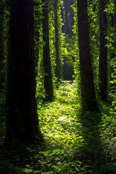 Path to neverland...by  Nuno M. Ribeiro