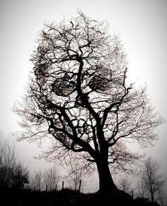 skull in tree