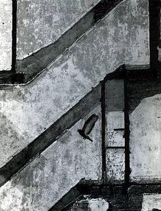 Kertesz, pigeon s eposant, New York, 20 mars 1960