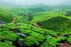 3 Popular Kerala Holiday Packages to Explore 'God's Own Country' The Best Way!@keralatravelt https://keralatraveltours.wordpress.com/2014/10/01/3-popular-kerala-holiday-packages-to-explore-gods-own-country-the-best-way/