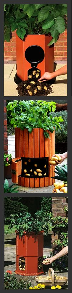 One Potato, Two Potato. Beautiful Ways to Grow Spuds... For best of gardening updates visit balconygardenweb.com