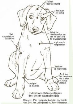 Practice acupressure for your dog - suinoel - - Pratiquer l'acupression pour son chien To practice acupressure for his dog – Osteopathy and acupressure for dogs – Wamiz Merle Australian Shepherd, I Love Dogs, Cute Dogs, Animals And Pets, Cute Animals, Amor Animal, Jack Russell Terrier, Baby Dogs, Dog Care